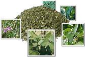五種類の茶葉